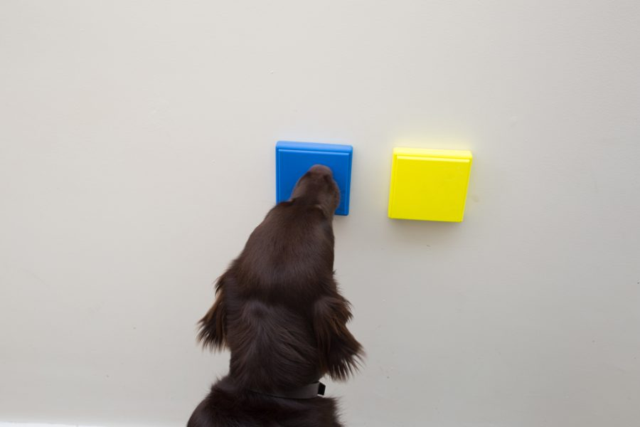 Developing an accessible toolkit for Mobility Assistance Dogs