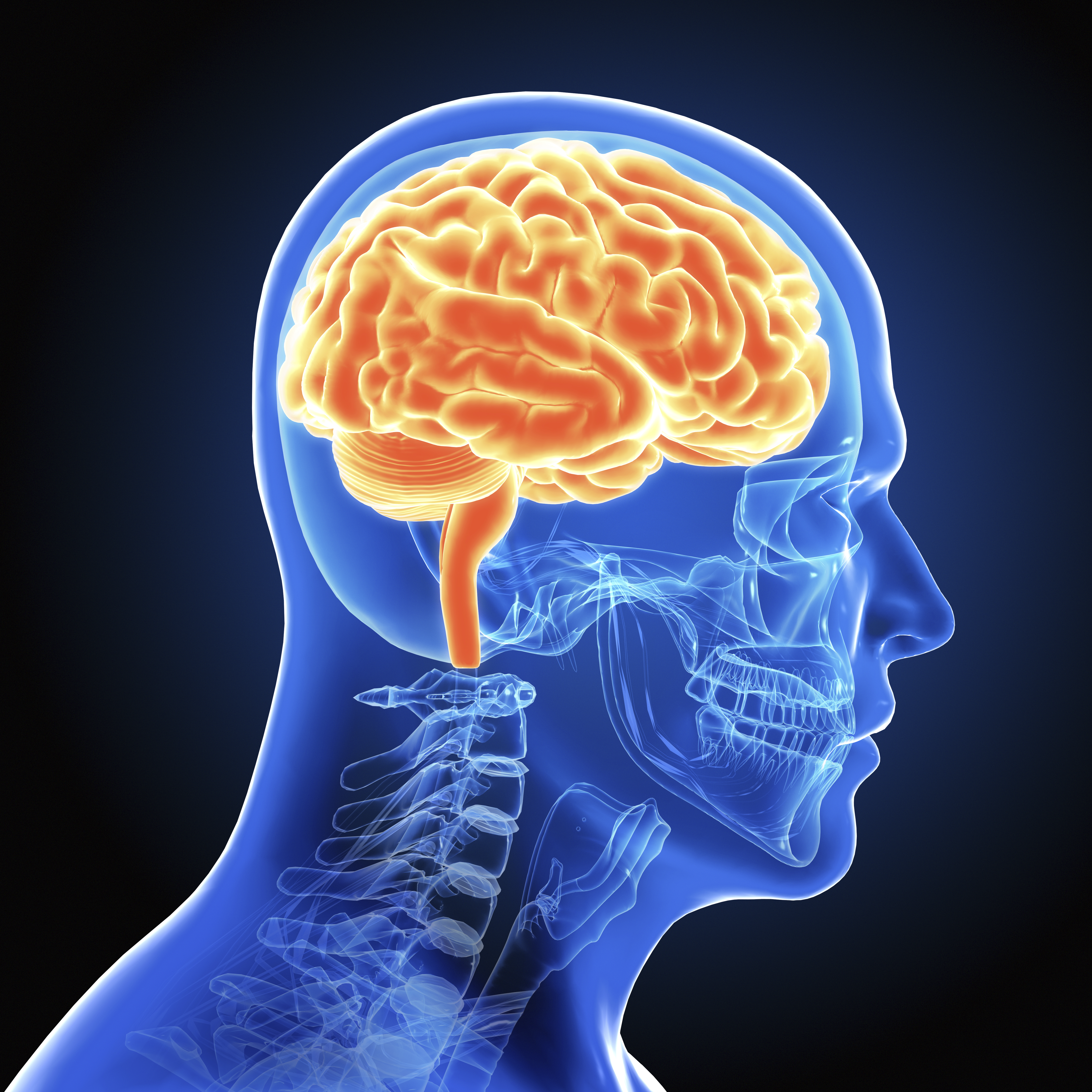 What is brain plasticity and why is it so important? – OU News