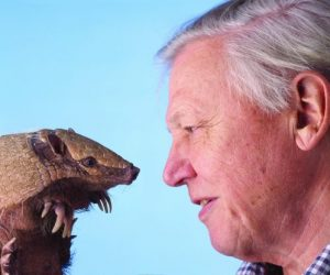 David Attenborough comes face to face with an armadillo.