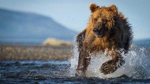 hunt-bear-pic