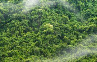Amazon Rainforest - Brazil