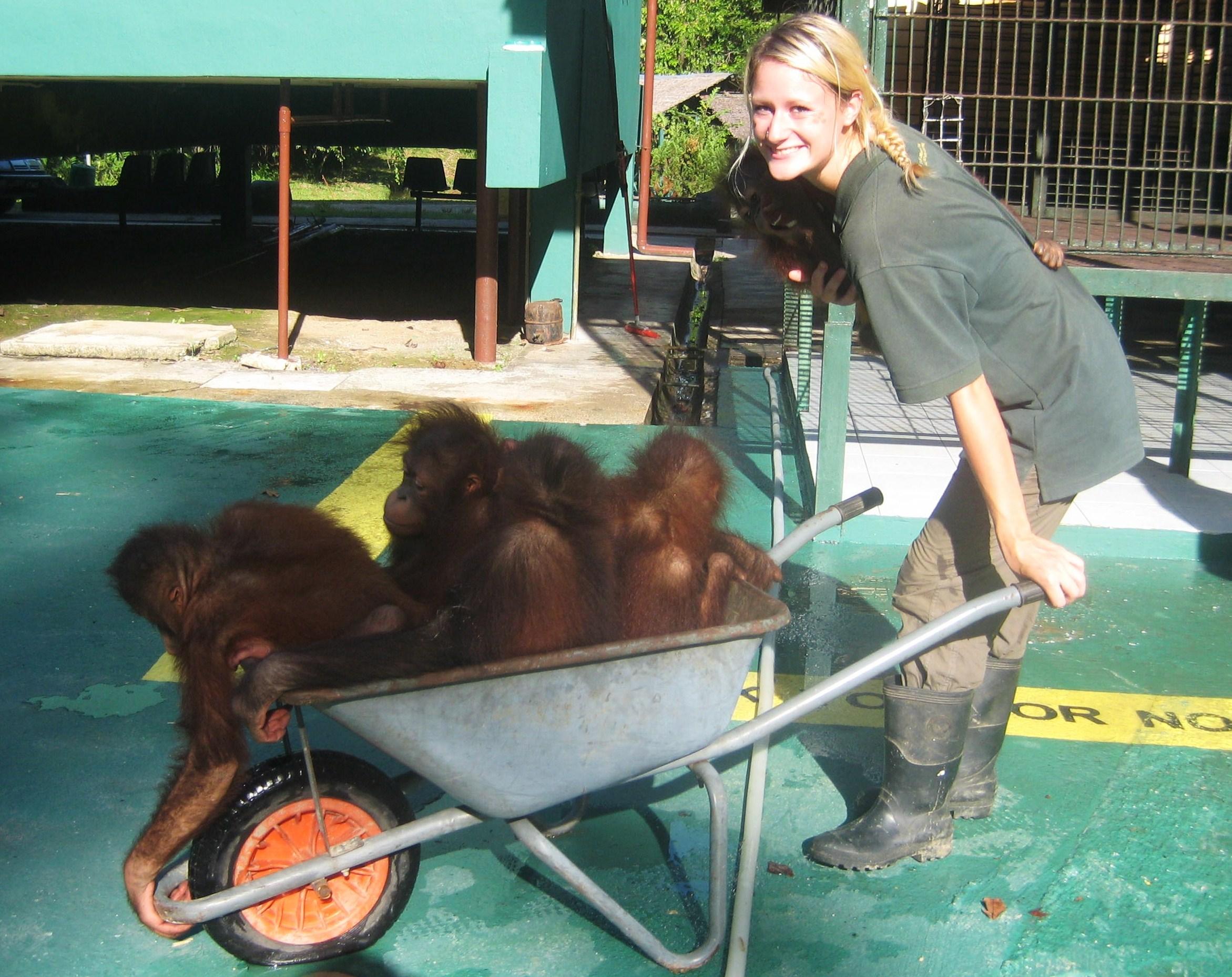 Caring for orphaned Bornean orangutans (Pongo pygmaeus) in Malaysia