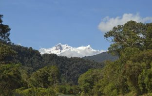 Antisana volcano above cloud forest