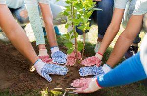 Team planting a tree