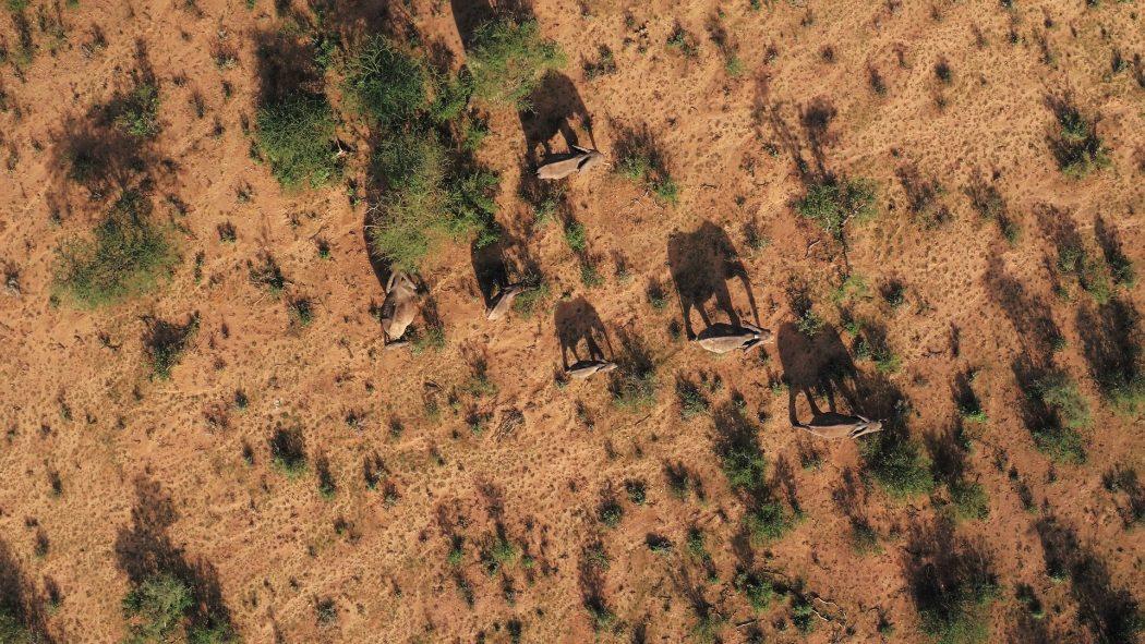 BBC photograph of elephants