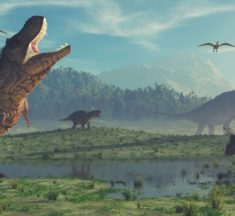 """'Asteroid was """"sole driver"""" of dinosaur demise"""