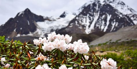 Modern plant diversity hotspot traced to mountain ranges 30 million years old