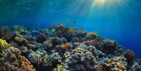 Artificial reefs could restore sea urchin populations and coral reefs